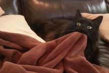 Cats that are having a mental breakdown / Gifs of cats that are totally freaking out