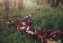 Farming life / Having a pocket farm is my dream...