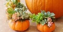 Holidays / Halloween / Décor, crafts, recipes and costumes for a frightfully fun Halloween. Autumn and Fall inspired ideas that are eco-friendly and natural.