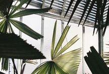 plants //