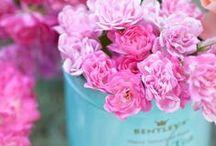 Blumen Flowers Fleur Green Flora / by Ovidia :-)