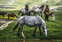 """The Mighty Horse / """"The wind of heaven is that which blows between a horse's ears."""""""