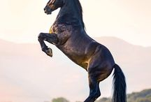 Horse - photography