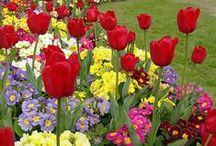 Flower Gardening / Tips and tricks for a healthy garden, landscaping ideas and flowers you will want to add to your garden.