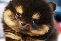 Naaaw: Cute Animals / Super cute animal photo's that make you go Nawww