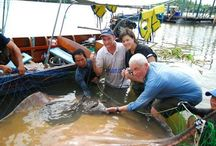 Jeremy wade River Monsters in Thailand / Thailand fishing report from Fishsiam.com detailing the fishing and filming with Jeremy Wade of River Monsters Death Ray featuring the awesome Giant freshwater stingray in Thailand.