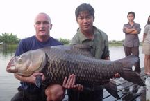 Carp fishing in Thailand / Photography of Giant Siamese Carp and other exotic carp species in Thailand.