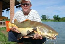 Predator fishing Thailand / Photography from Fishsiam from our Thailand predator fishing trips.