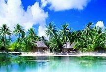 -t r o p i c s- / The Tropical Life