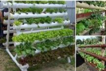Hydrponic#Garden tower / Veggies