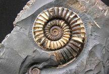 Stenar och fossiler