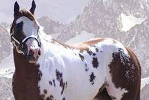 Horses / by Ilaena Mellentine