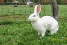 Ravishing Rabbits / Meet some of the ravishing rabbits we are lucky to call friends at WFAS!