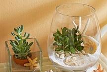 Terrariums & Miniature Gardens / by Irene Summerton