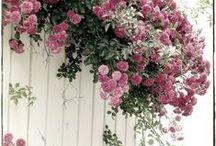 ogród,kwiaty w domu / wszystko co zielone,świeże