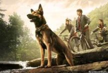 Max (2015) / Wallpapers from the Max movie 2015 about a German Shepherd dog :]