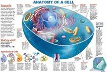 "The Cell and ""Its Domain"" / The magic and mystery of what happens ""in and around"" the cell membranes."