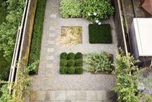 garden . plants