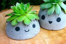fiori piante e giardini / amiamo la natura