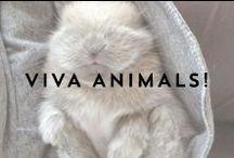 VIVA ANIMALS! / Fluffy, furry, lovely.