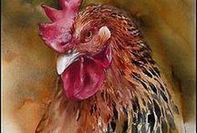 fjærfe/poultry