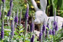 Rabits resistant plants