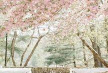 Asian Cherry Blossom