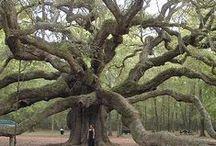 Trees love