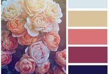 photo &color