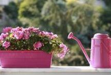 Pflanzen & Garten / Die besten Tipps für den heimischen Garten. Wie pflege ich meine Pflanzen und sorge dafür, dass sie auch im nächsten Jahr in voller Pracht erblühen.