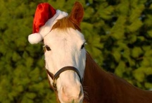 Equines / #equine #horse http://globalhorsecents.com/ / by Global Horse Cents