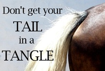 Horse Quotes / #horse #quotes to Ponder. http://globalhorsecents.com