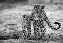 Wildlife Photography / inspirational photography