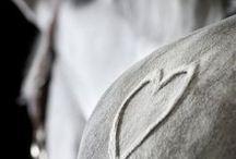 Hevosrakkautta / Elämän tärkeimmät asiat näkee vain sydämellään