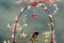 Fiori / Foto fiori