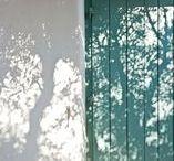 flwr / shadow & light