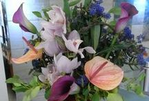 General Flowers / A range of plants and flowers that we offer to suit the changing seasons and different occasions.