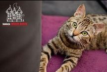 Have Been Adopted :) / Cats who found home with our help :)