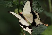 Butterflies / We love butterflies so much - we made them our mascot!