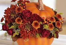 Dynia/Pumpkin