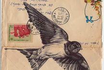 Birds / by C Bryson