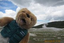 Travels with Ollie / Ollie the Otter wants to visit every national park in the country before 2016. Read his travel blog here: https://www.conservancyforcvnp.org/blogs/travels-with-ollie / by Conservancy for CVNP