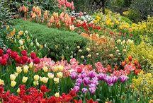 Flowers Forever / Enchanting swirls of colour to delight the senses