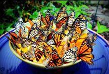 Butterflies / by Lynda Kaye