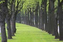 {Landscape} avenues