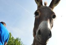 Our Animals! / Tha animals of our Agriturismo Le Piagge!