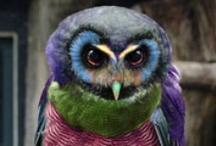 Owls, whooo are you? / Whoo, Whooo