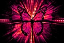 Butterfly / Life Is Like a Butterfly