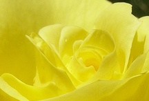 yellow / by Diane
