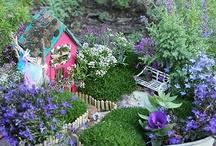 Fairy Garden and Homes